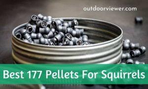Best .177 Pellets for Squirrels