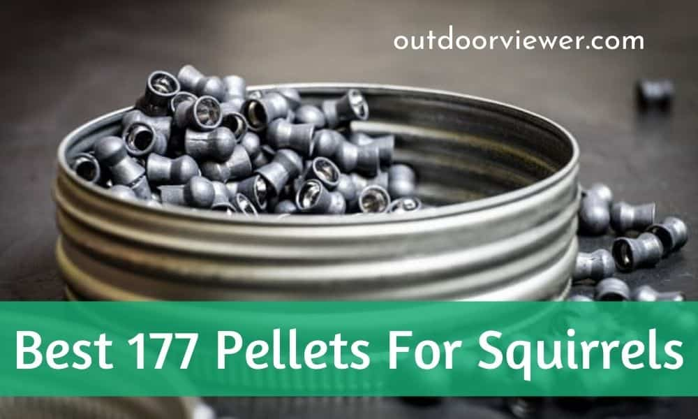 Best .177 Pellets for Squirrels