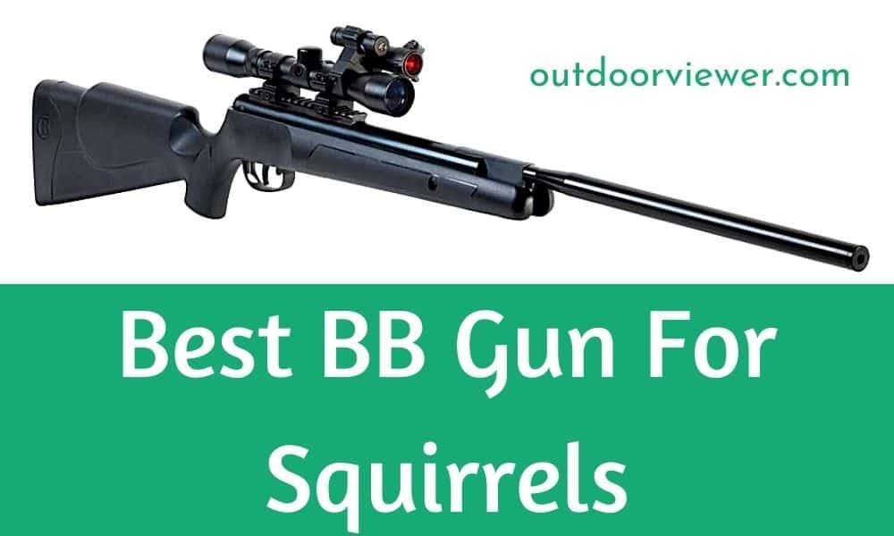Best BB Gun For Squirrels